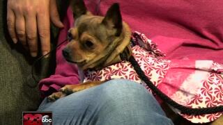 Meet our 23ABC Pet of the Week, Kiwi!