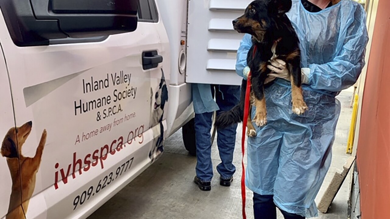 Dogs Rescued