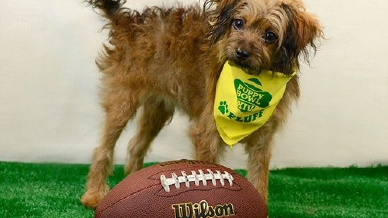 2 Las Vegas dogs part of Super Bowl festivities