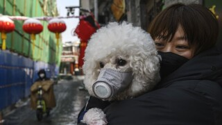 Dog of COVID-19 patient tests positive for 'low level' of virus in Hong Kong, government says