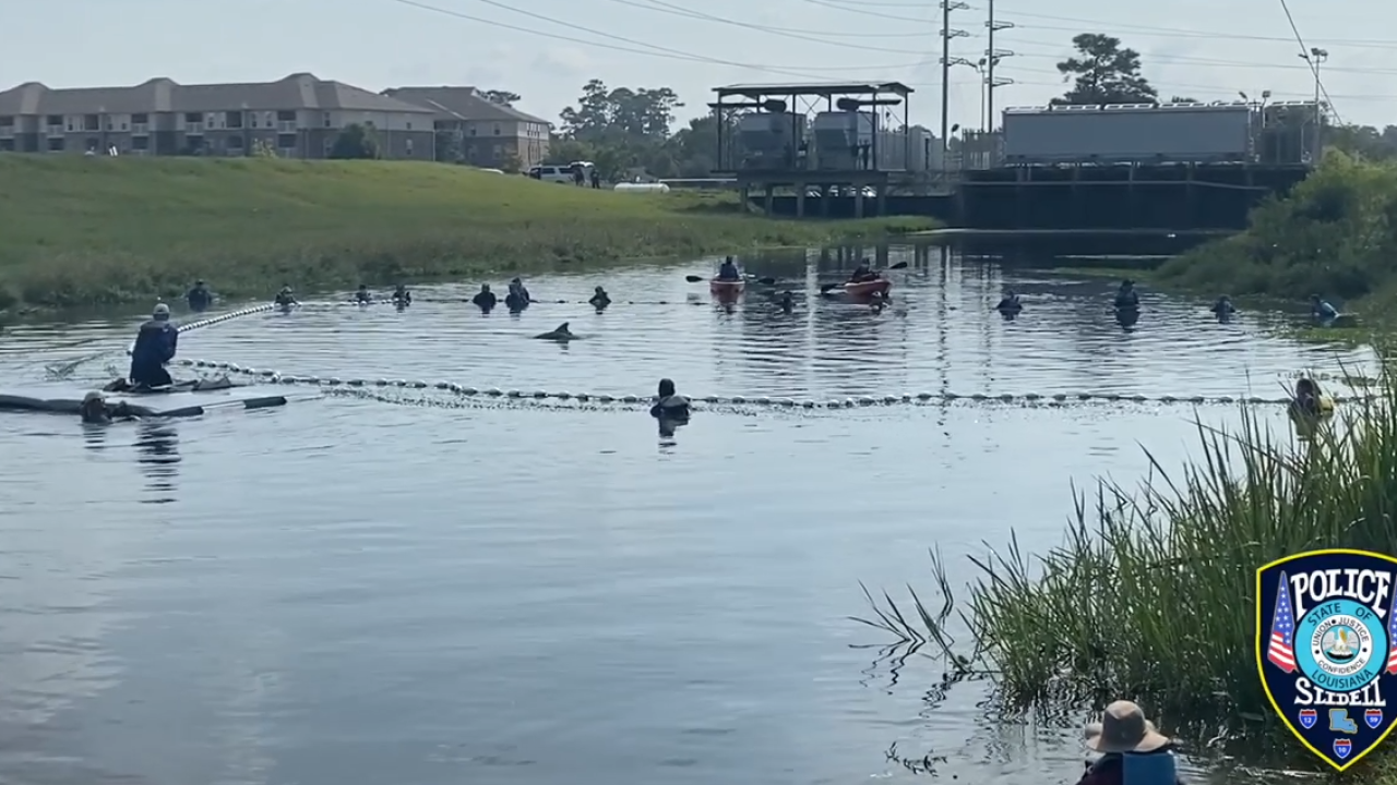 Slidell dolphin rescue.PNG