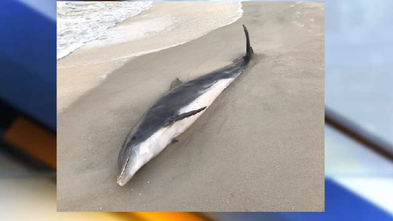 NOAA officials seek information on death of two dolphins in Florida