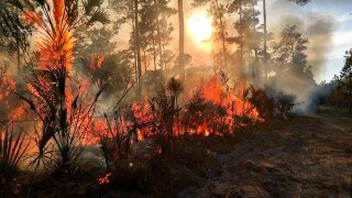 Collier wildfire the largest in the state, but 90% contained