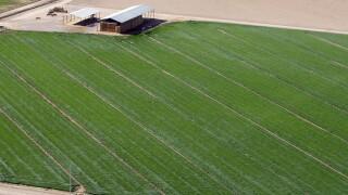 Agriculture Arizona