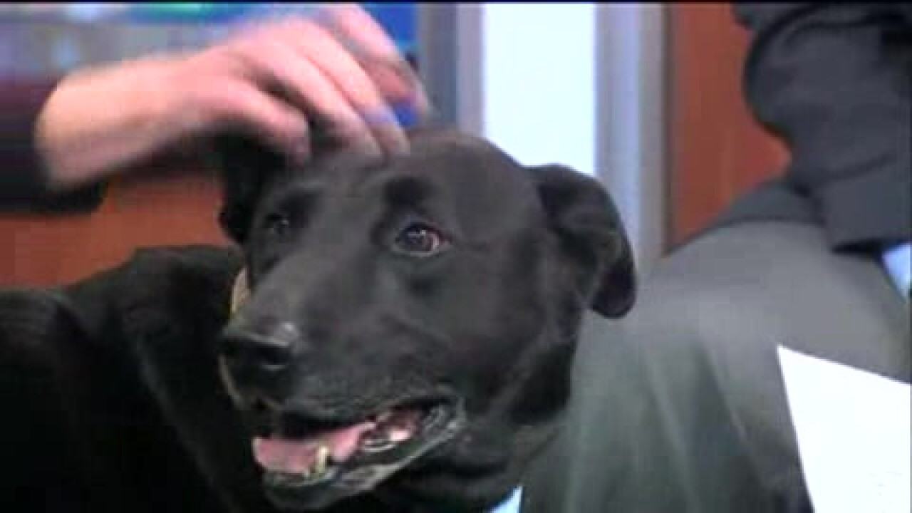Virginia This Morning: Henrico Humane Society and Helping Hands