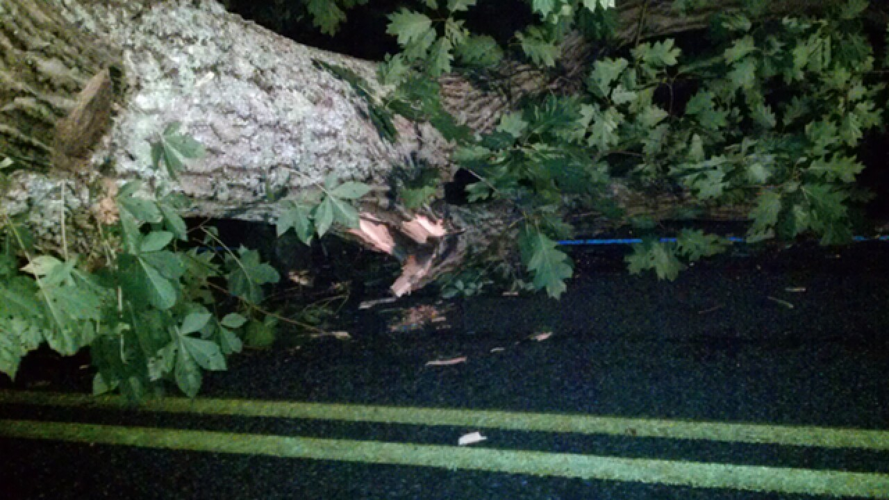 Tree in the road? How to report storm damage