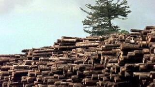 Logging, Logs, Trees