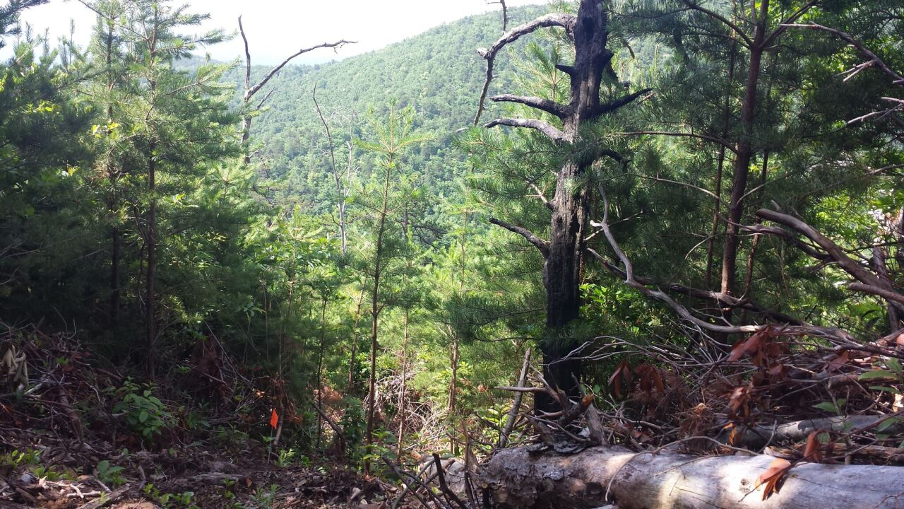 Crude trail leads police to largest outdoor marijuana grow ever found inVirginia