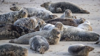 Britain Seals