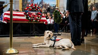 George H.W. Bush's former service dog Sully has a new job with the US Navy