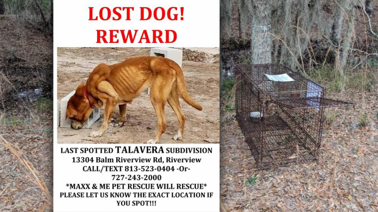 lost-dog-talavera-subdivision-riverview.png