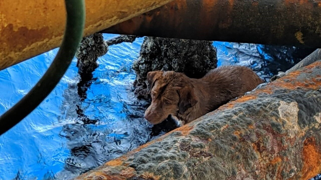 Photo of Dog Rescued At Sea