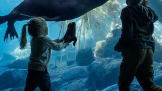 Kids at Sea Lion exhibit, Henry Doory Zoo