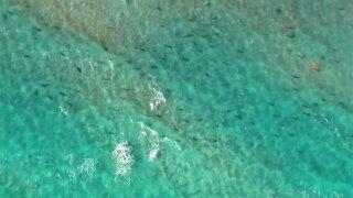 Shark migration 2019