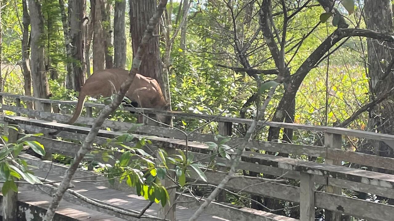Audubon Florida & Corkscrew Swamp Sanctuary via Renee Wilson (3).jpg