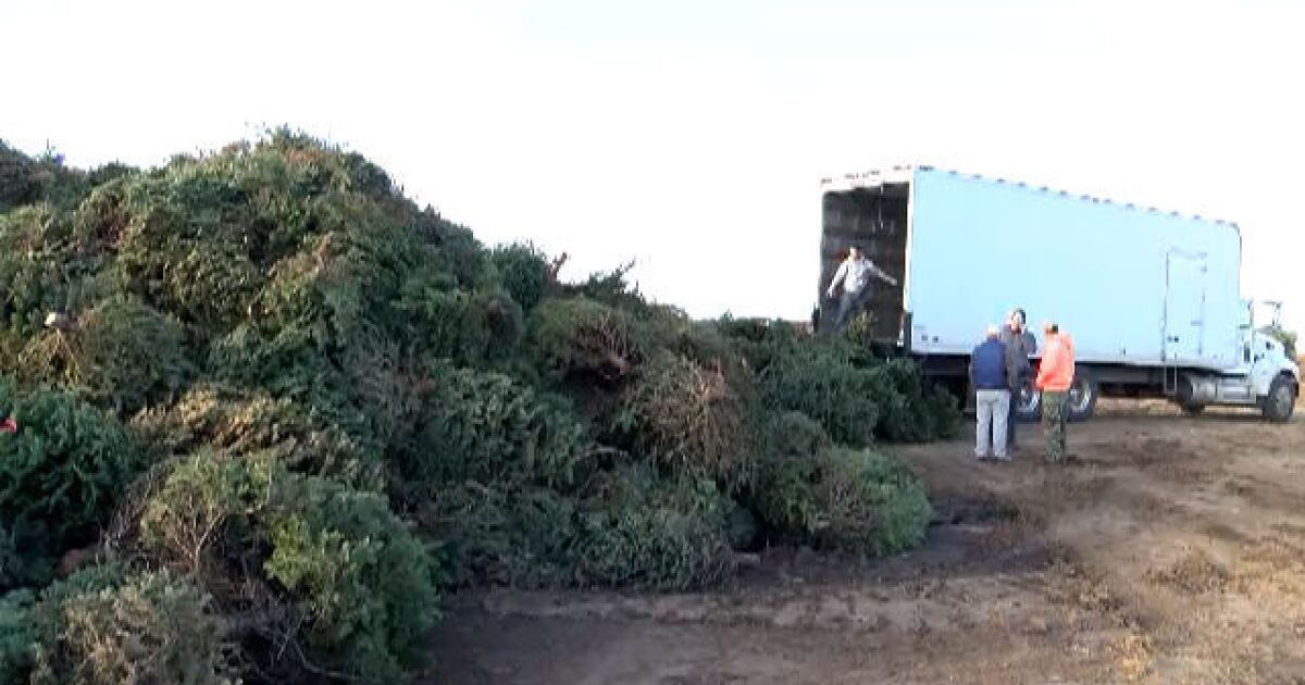 - MAP: Where To Recycle Your Christmas Tree In San Diego