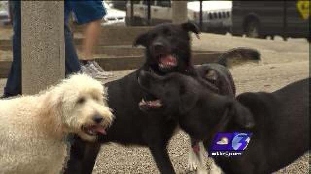 """Dangerous Dogs"" ordinance could be changing in James City County"
