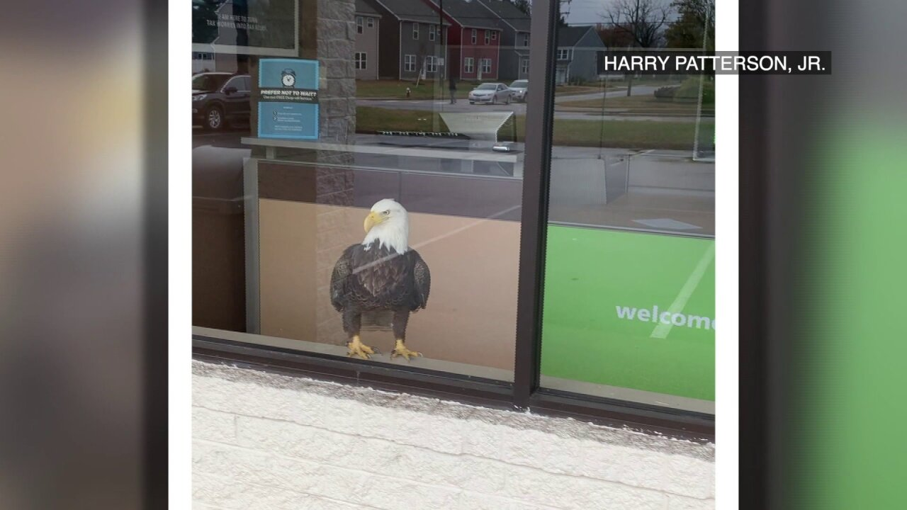 Bald eagle breaks through window, enters Virginia Beach H&R Block office