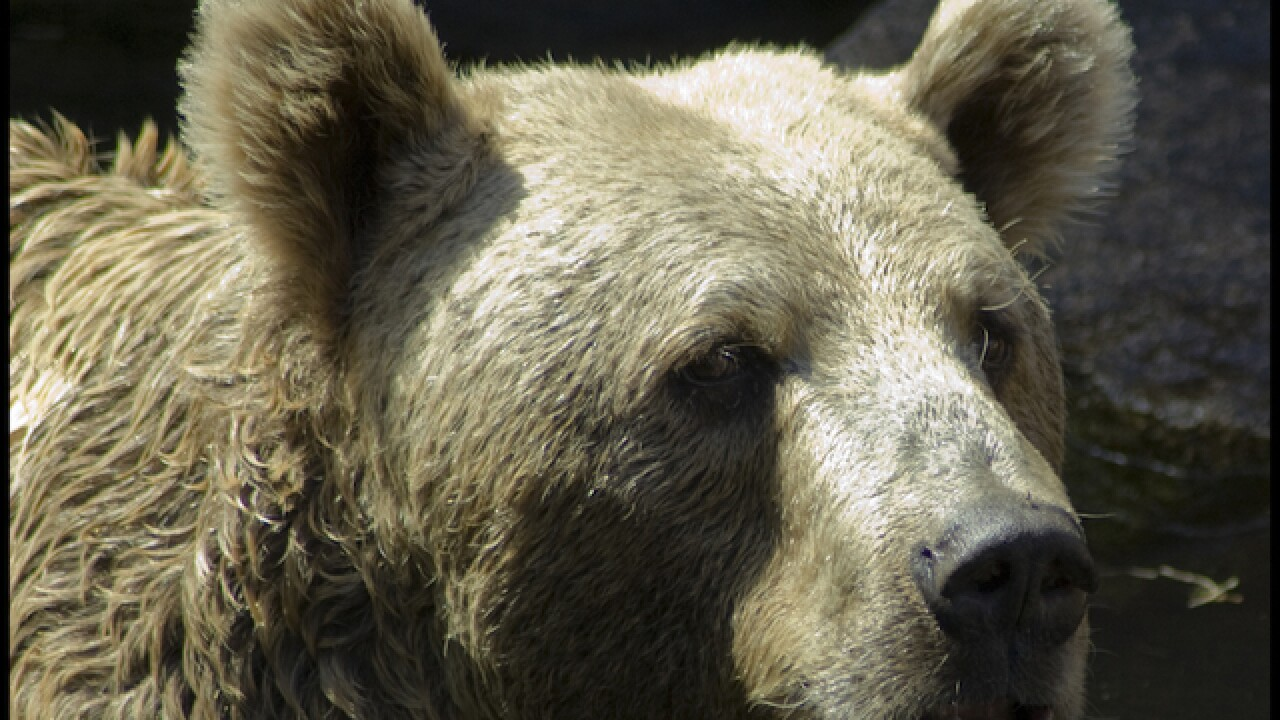 Bear attacks, injures man in mountains east of Los Angeles