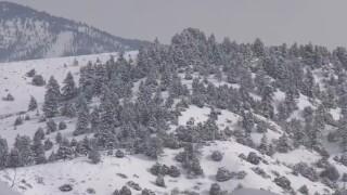 snow hunting.jpg
