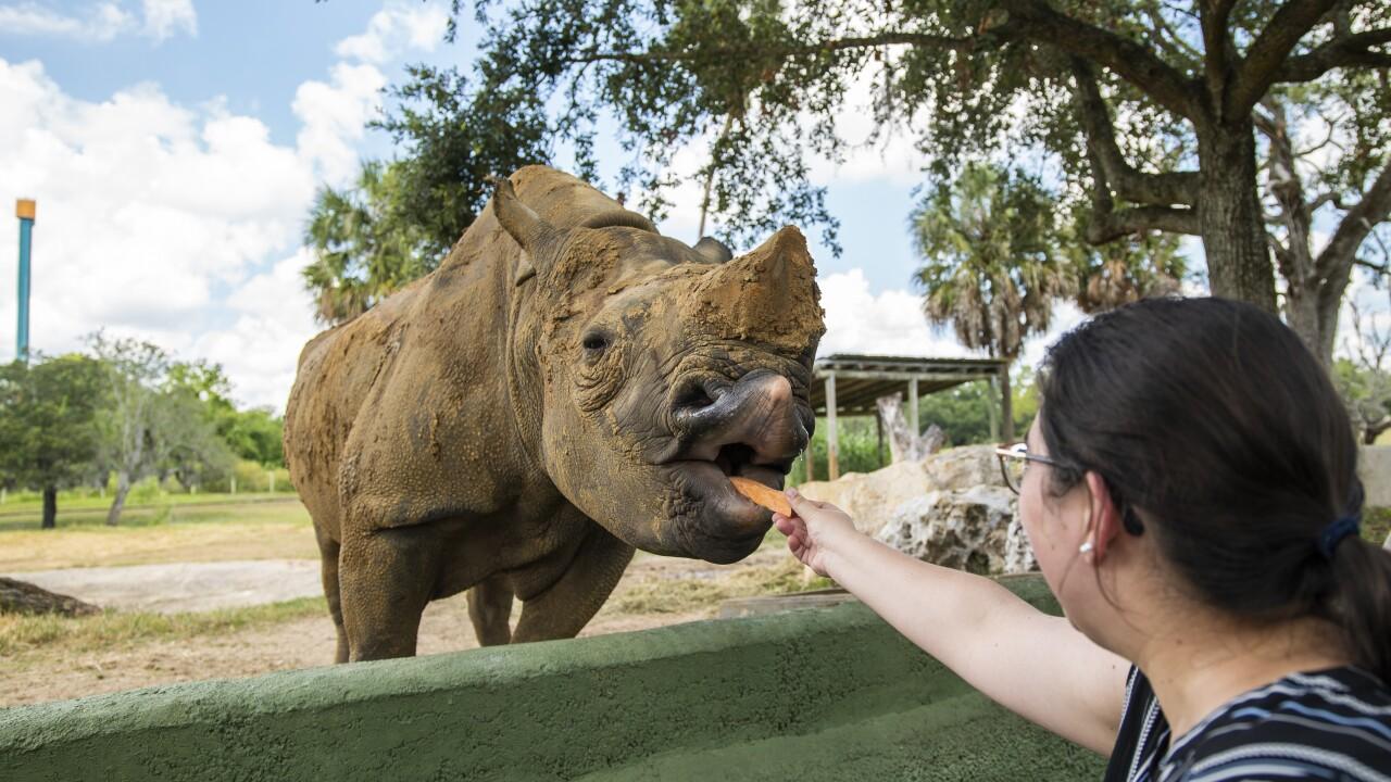 Rhino Encounter at Busch Gardens Tampa Bay.jpg