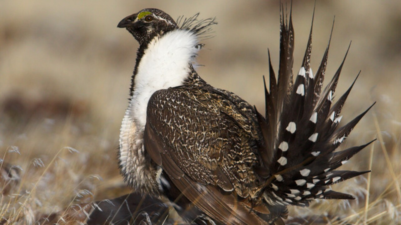 Idaho officials OK implementation of sage grouse