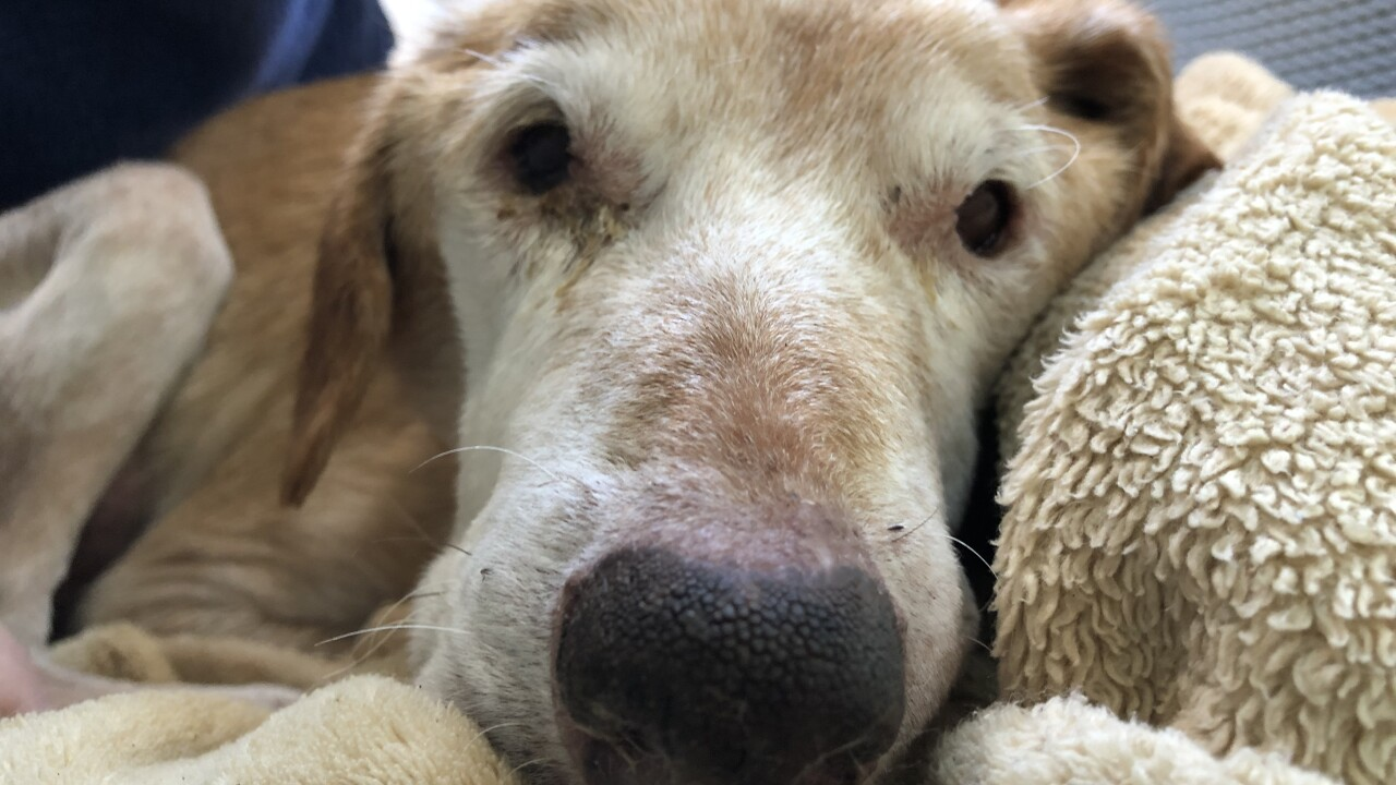 Dog gets second chance at life after Norfolk owner charged with animal cruelty