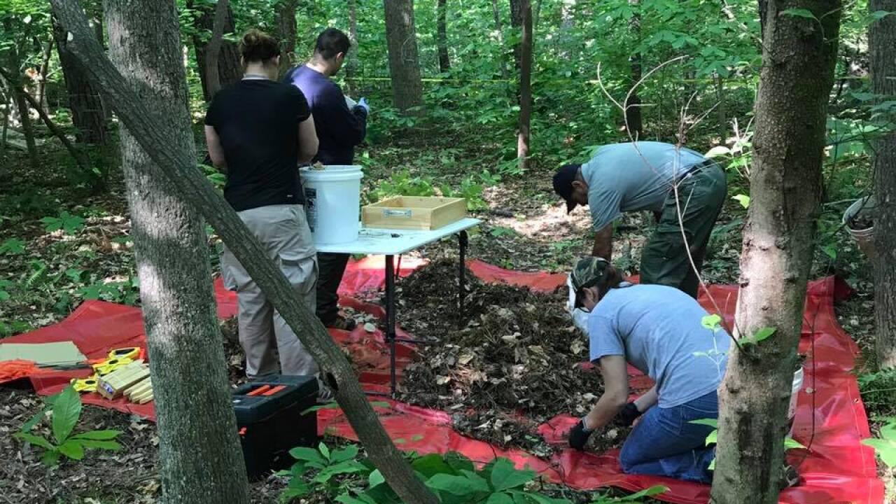Human skeletal remains found in Yorktown, officials call death 'suspicious'