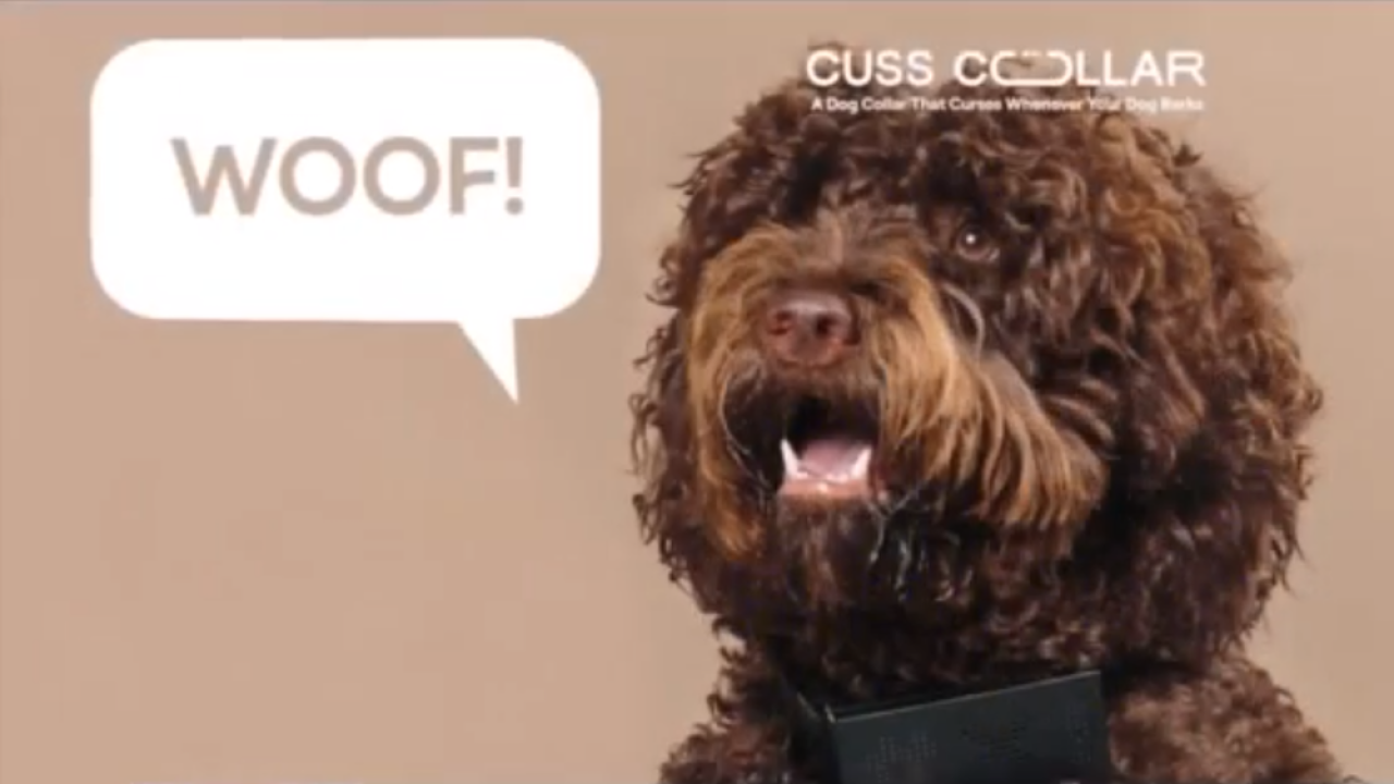 Cuss Collar: New dog collar will your dog's barks into swear words