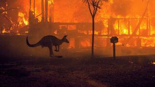 twip-01-kangaroo-fires-ps-200102_hpMain_1_16x9_992.jpg