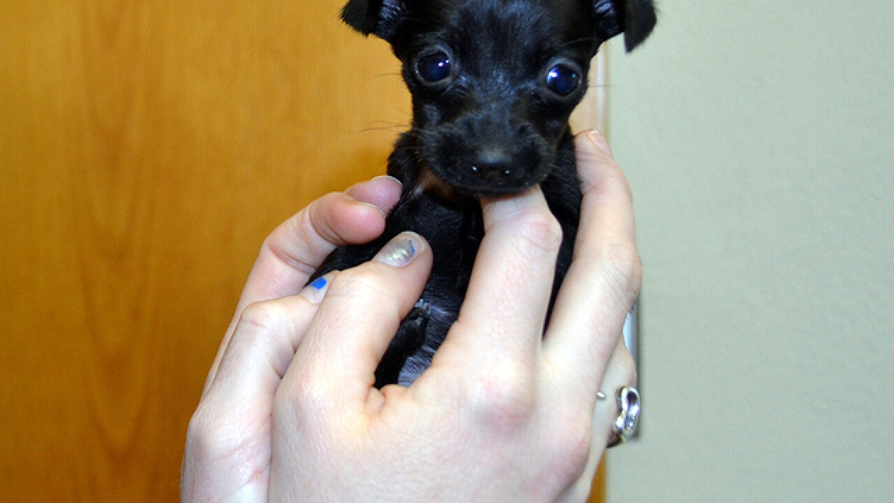 Tiny puppy abandoned at local animal shelter