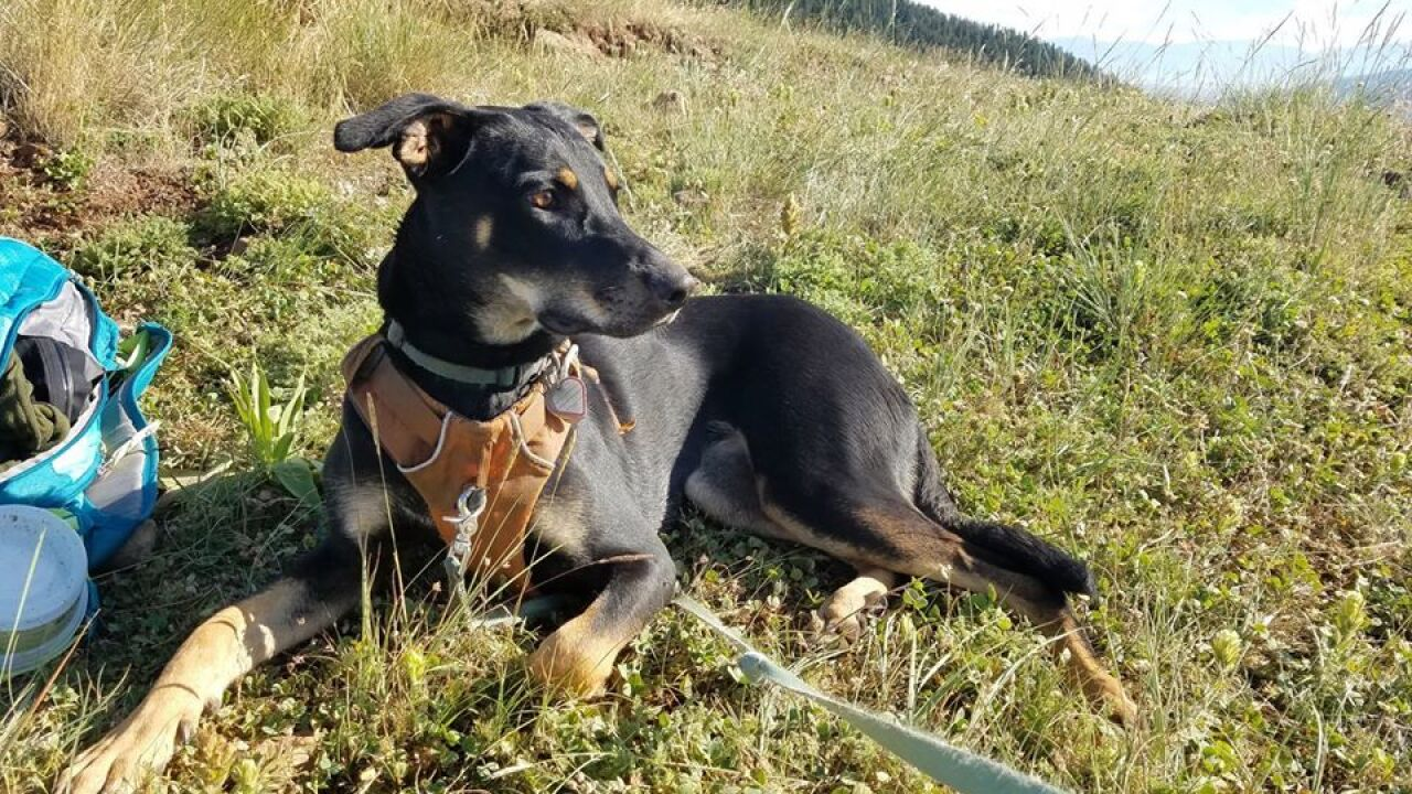 Dog killed in trap