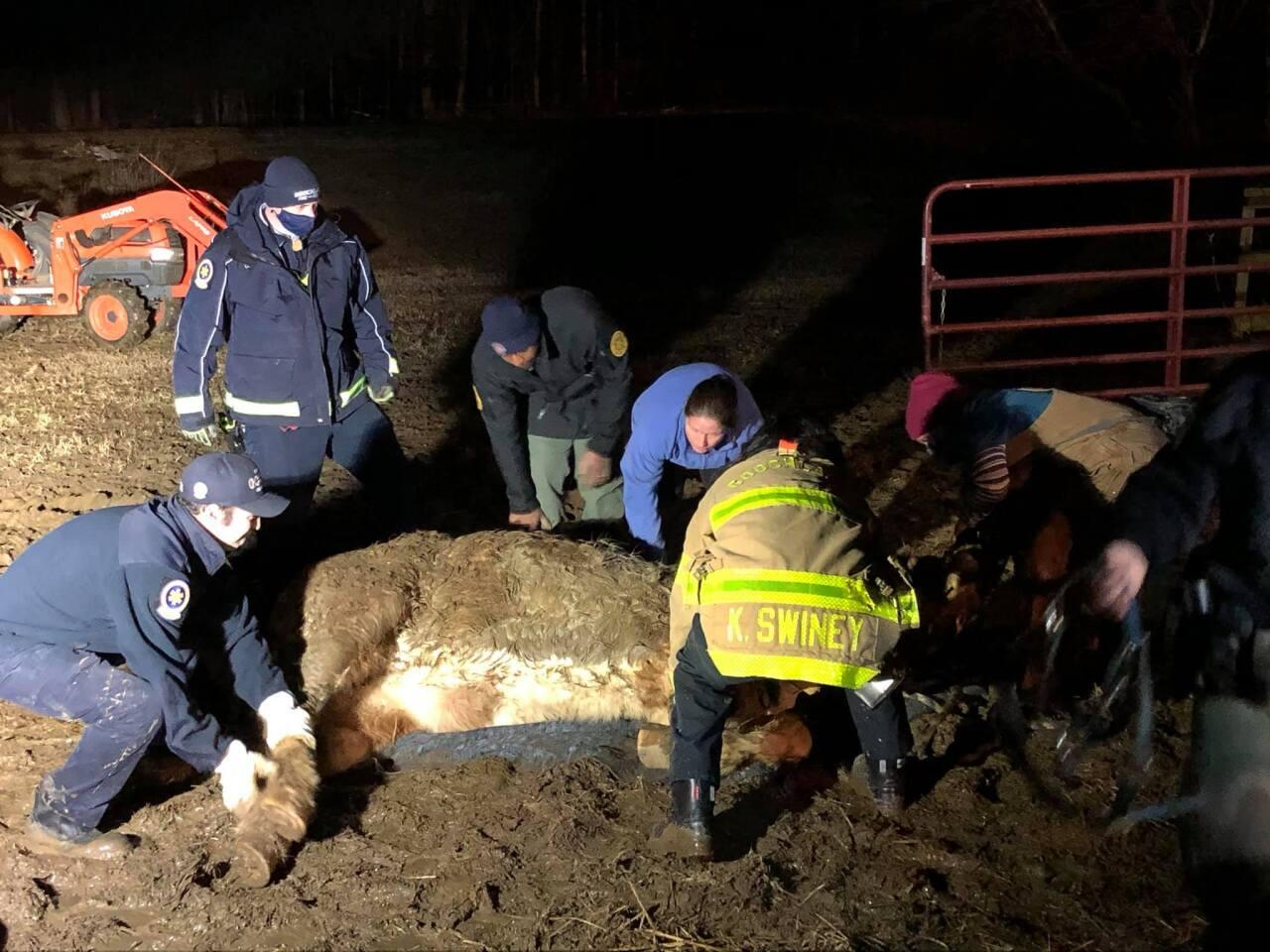 Goochland Horse Stuck in Mud 3.jpg