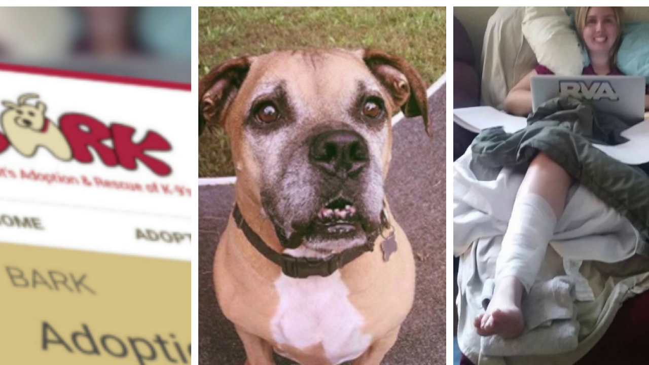 Dog with known history of biting, causing serious injury continually listed for adoption by Ashland rescueagency