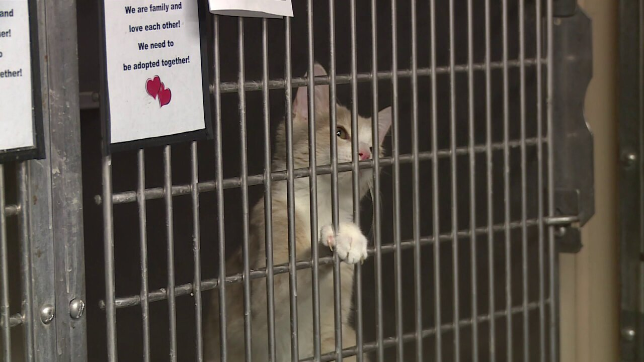 Animals rescued from Dorian up for adoption this weekend