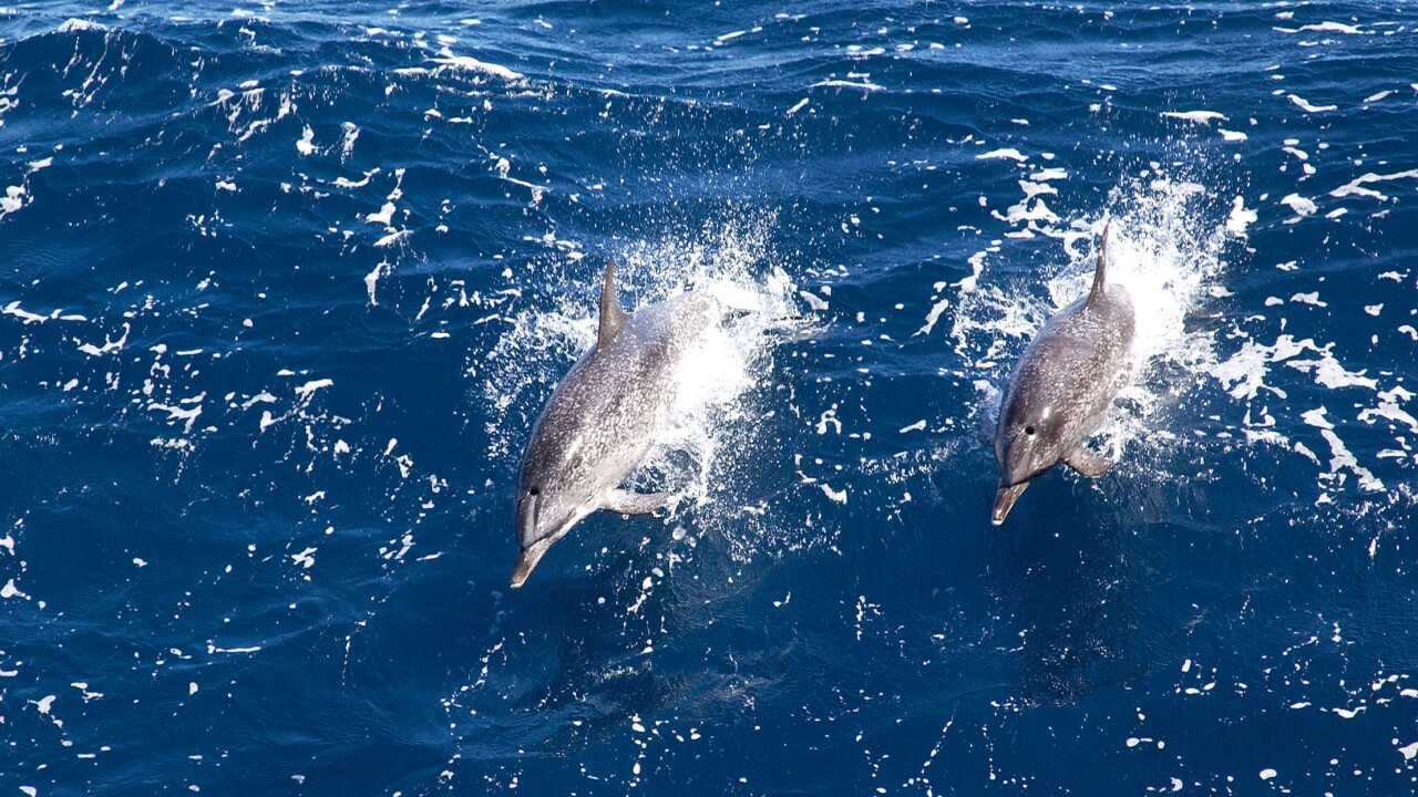 North Korea's military may be training dolphins, report says