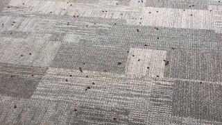 Bees inside Brandywine Elementary