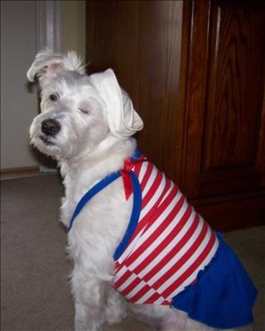 YES! Pics: Patriotic Pets