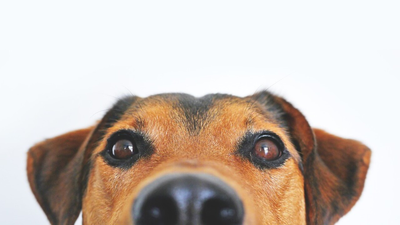 Pet-nups: More couples are adding pets to their prenuptial agreements