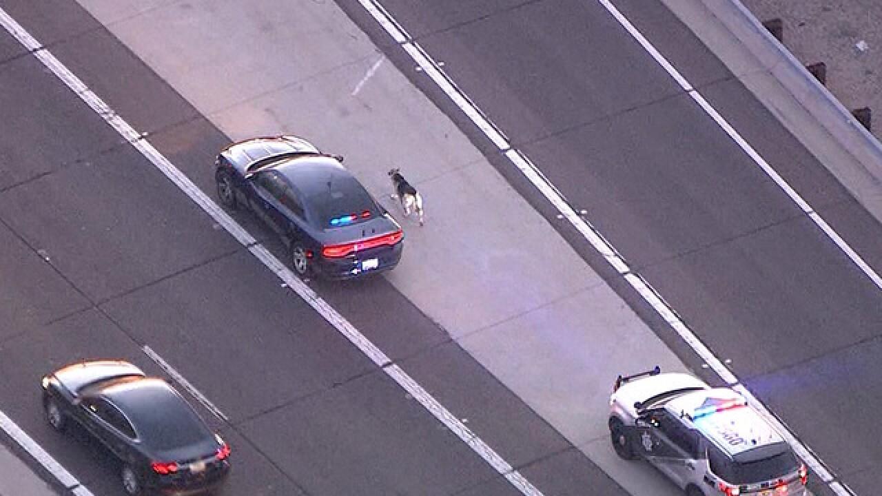 PHX trooper hurt, dog captured after hours loose