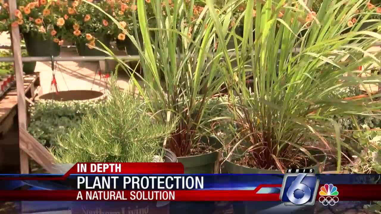 Natural tips for keeping mosquitoes in check