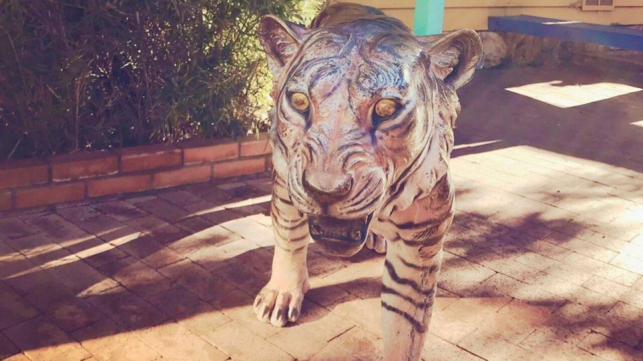 Trail Dust Town Tiger