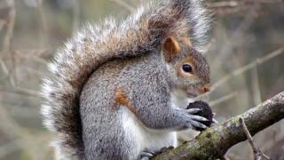 Tails of Michigan Wildlife