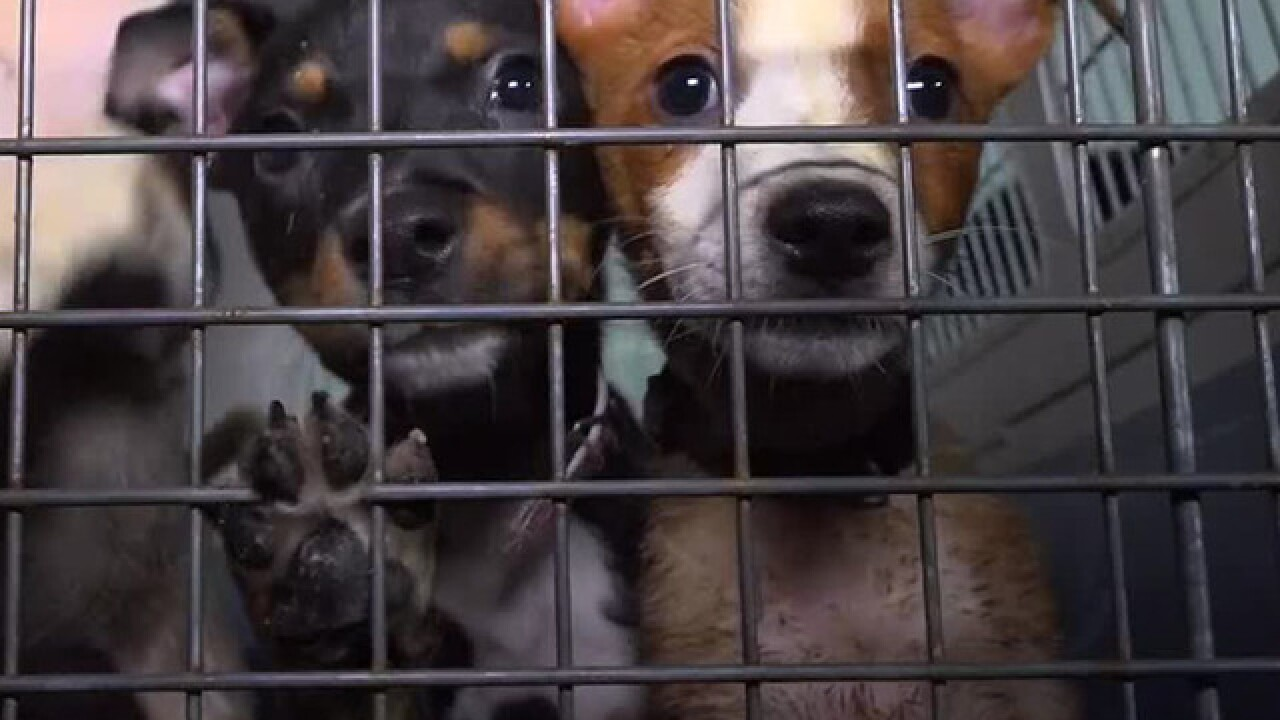 Dogs rescued from Arkansas shelter taken to San Diego