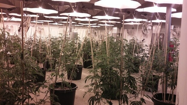 PHOTOS: Neighbors discover pot factory in northwest Detroit business