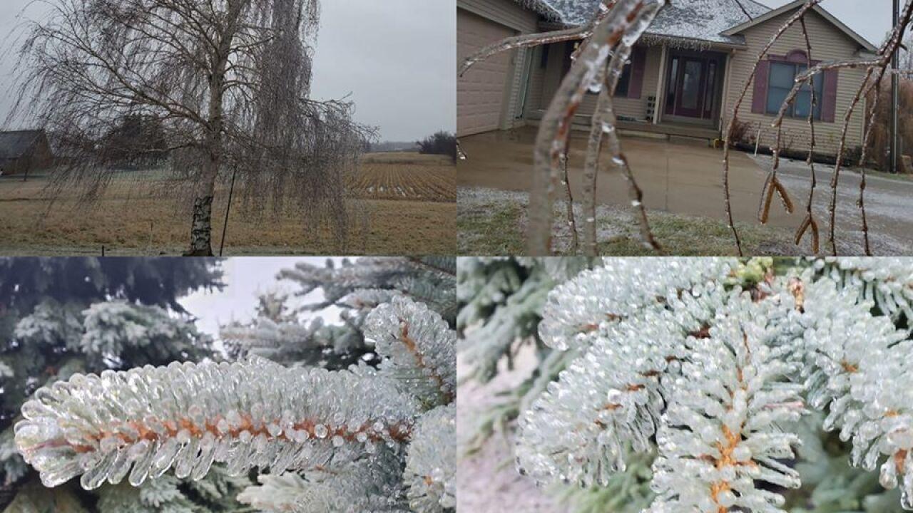 Pine Trees in Conklin - Courtesy Jill Armock via Facebook.jpg