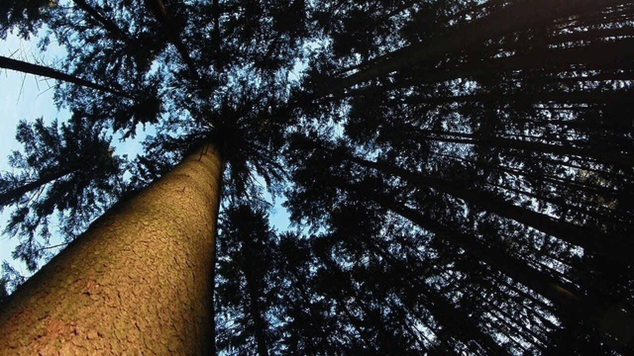 Man arrested after spending 12 hours in tree in Seattle