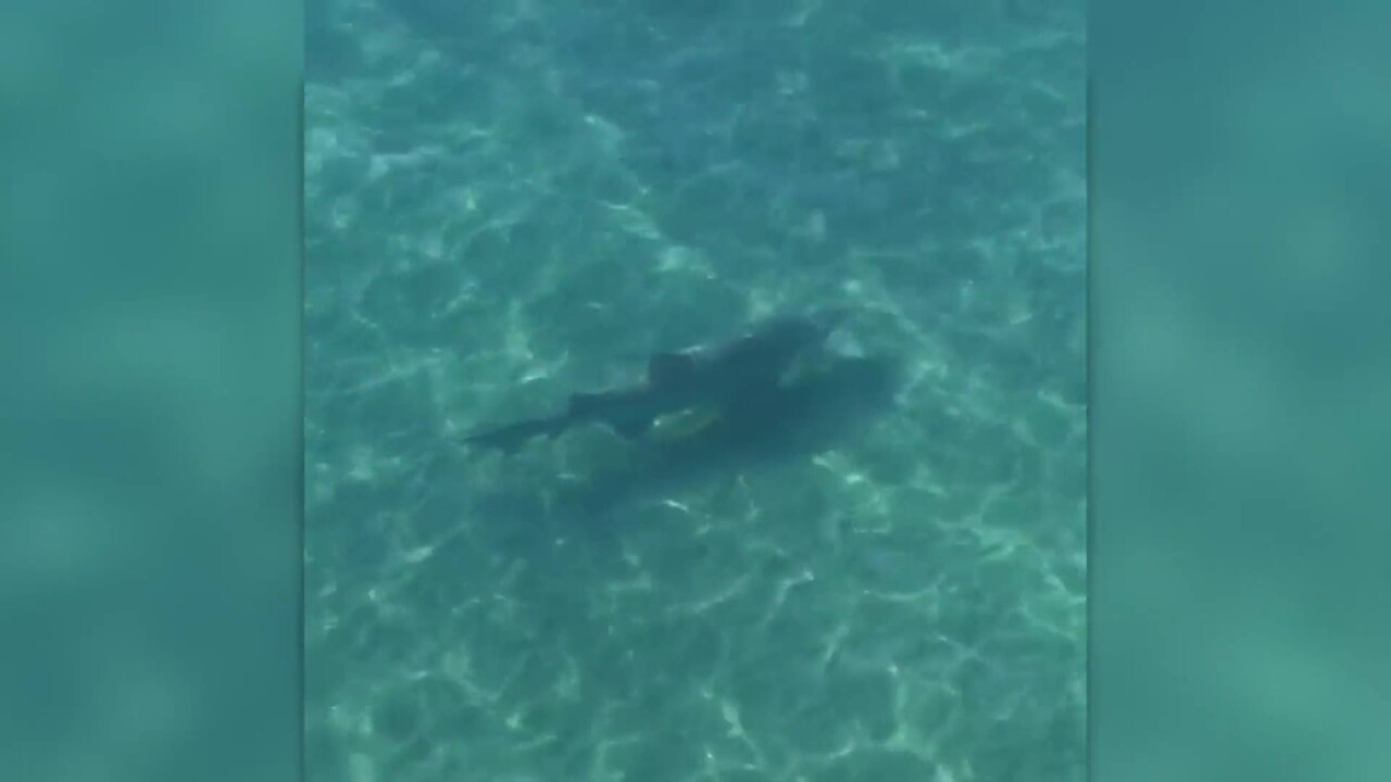 Large shark spotted off Kitty HawkPier