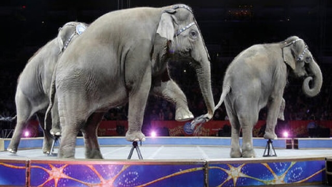 Elephants perform for final time at Ringling