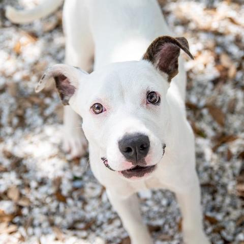 PHOTOS: 20+ adoptable pets in the Tampa Bay area for the weekend of September 14